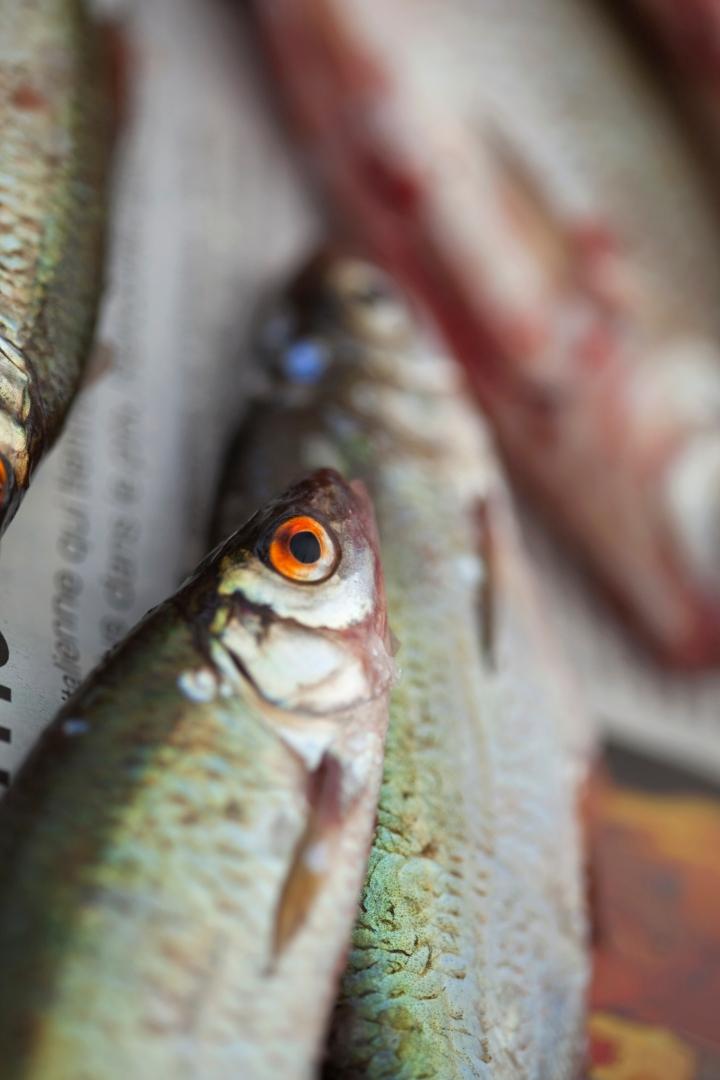 Wolfgang Nöckler, Rhetorik oder Fische sind schlechte Biographen